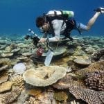 Anantara: Coral Protection in Maldives