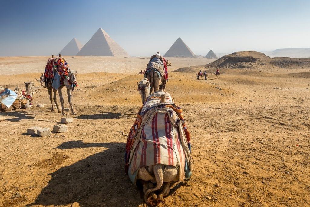 pyramids giza camel