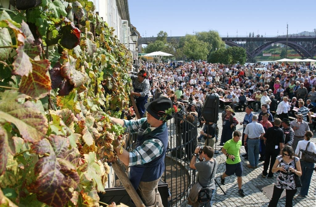 Maribor vine festival