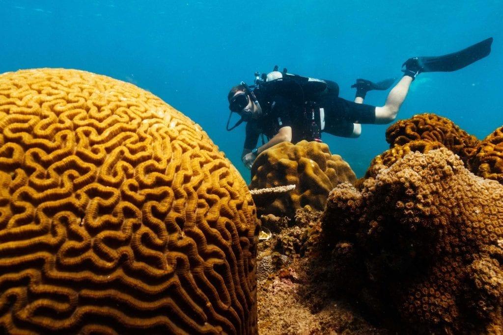 Con Dao diving