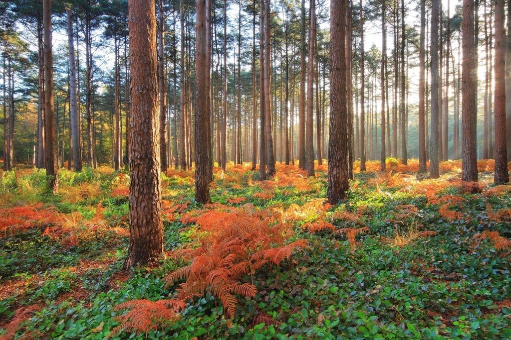 Things to do in New Forest