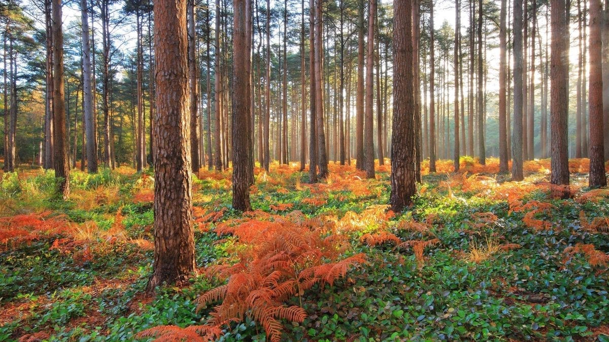 Autumnal Walking in The New Forest