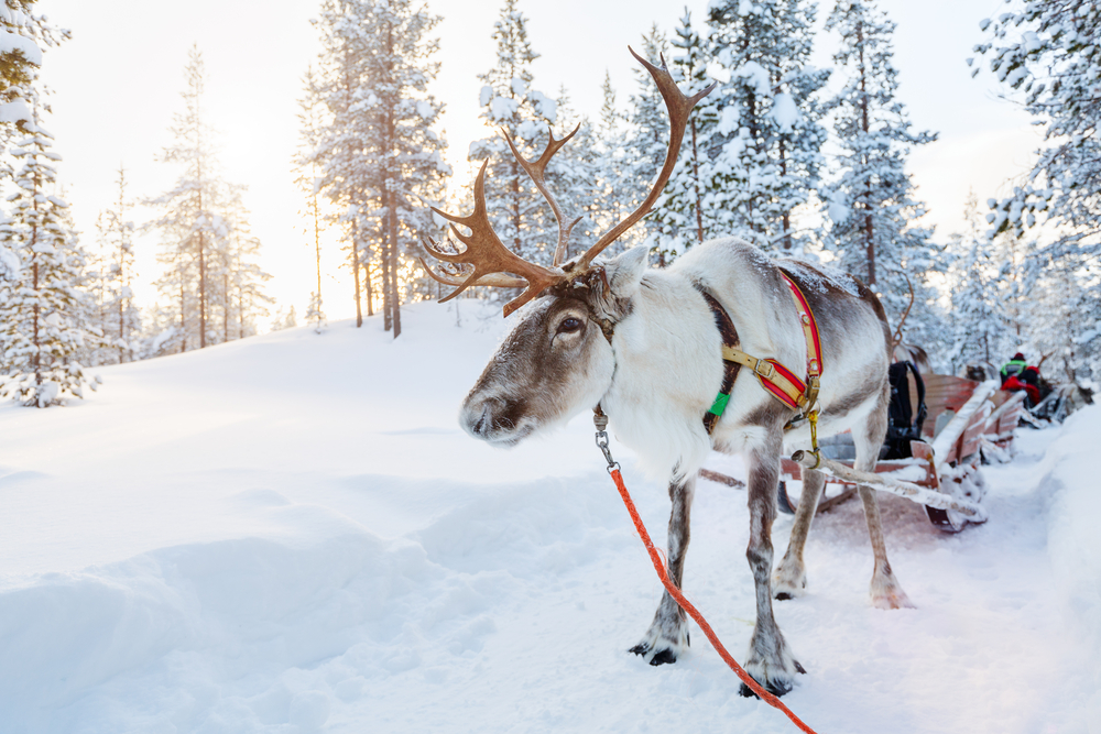 Lap It Up this Winter in Finland