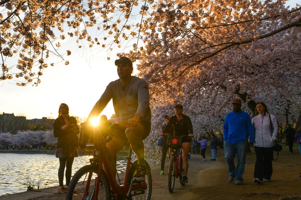 https://cherryblossomwatch.com/national-cherry-blossom-festival/