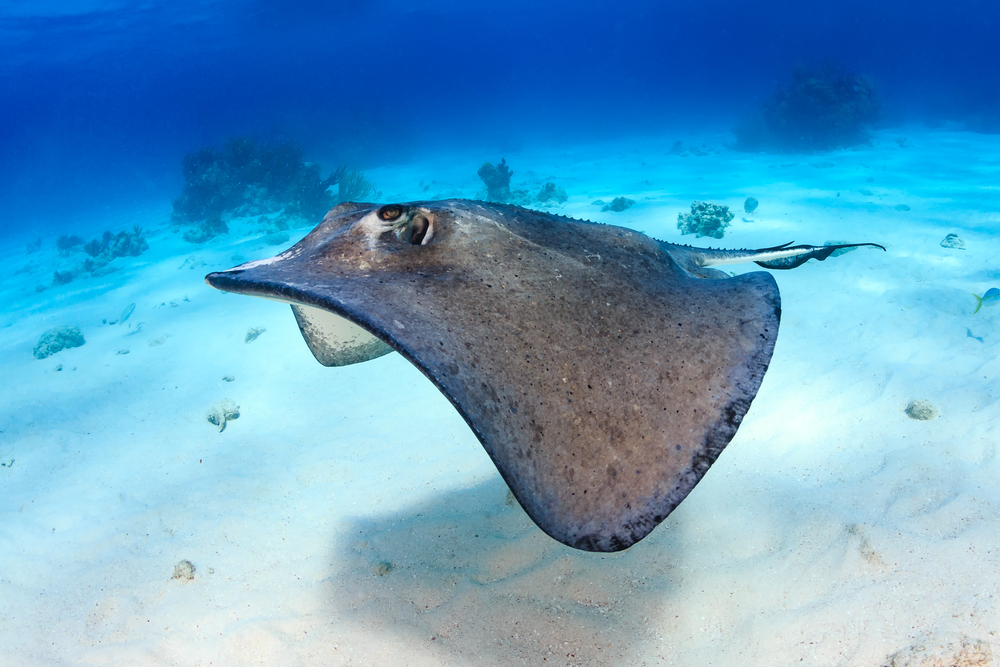 Belize to Open First National Ray Sanctuary