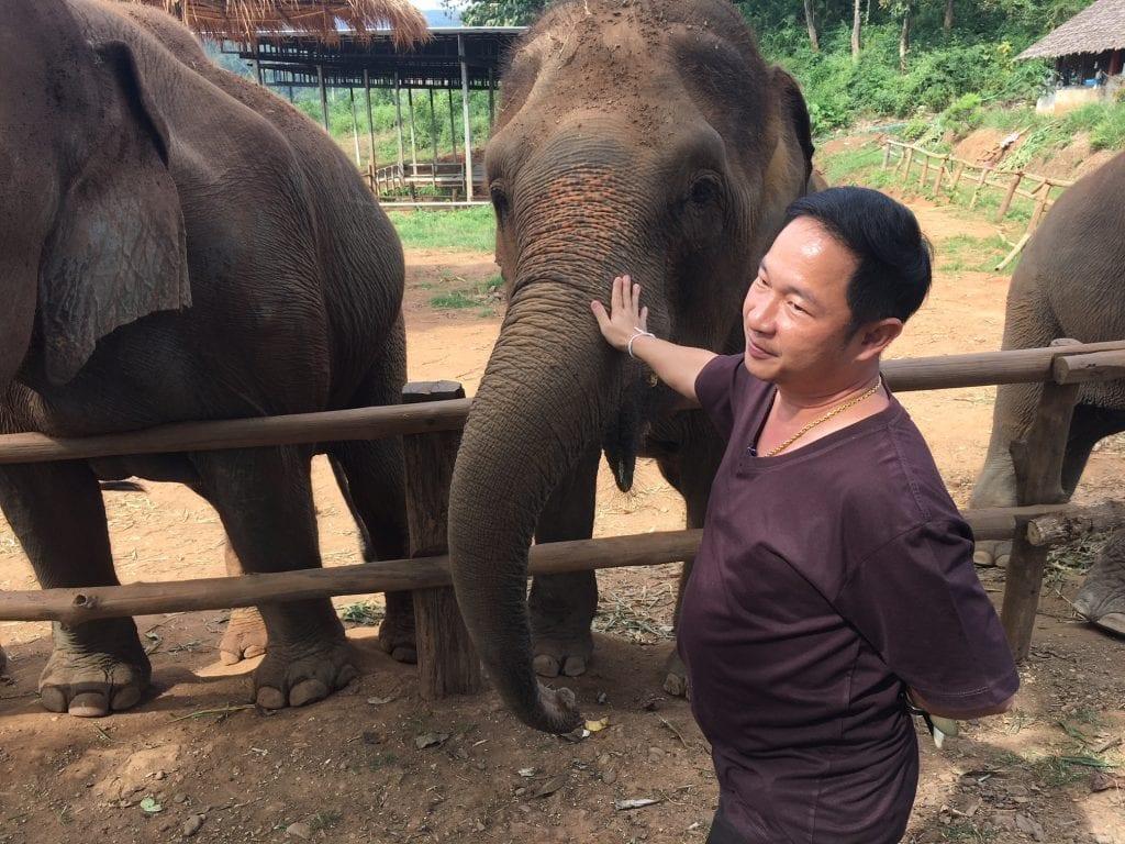 tuk tuk diaries tum elephant