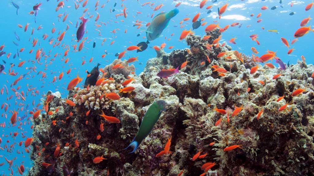 Savusavu, Fiji: the Perfect Ecofriendly Escape