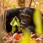 Follow in the Footsteps of Jane Goodall