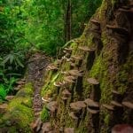 Cardamom Tented Camp: Saving Rainforests