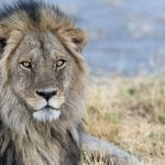 Timbuktu's Top 2018 Safari Camps