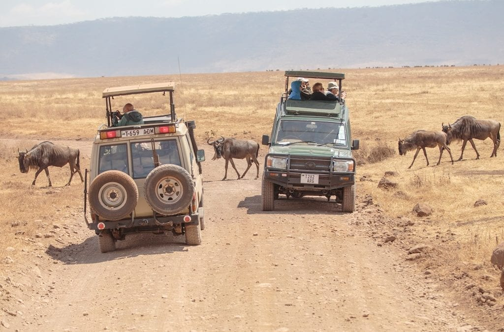 What Was Your Favourite African Safari?