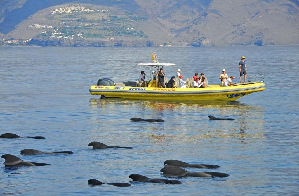 Dolphin watching at Playa Santiago