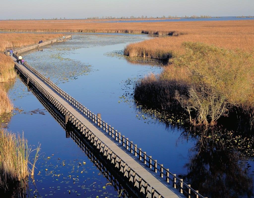 The Marsh Boardwalk at Point Pelee