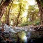 Celebrate International Day of Forests
