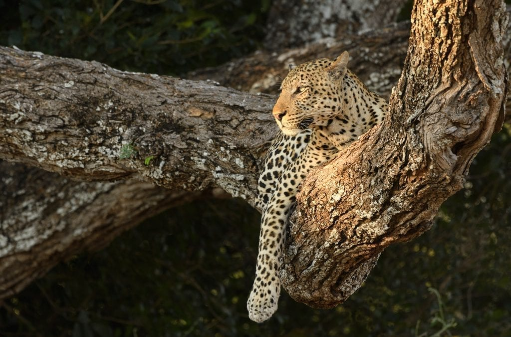 African Safari Holidays Avoiding the Crowds