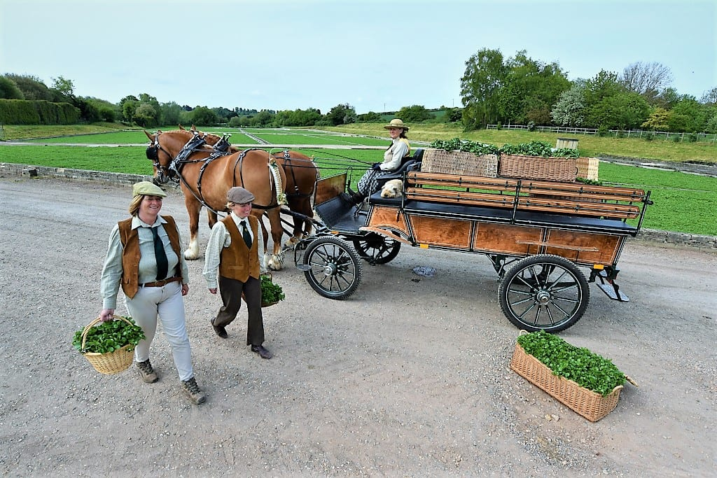 Delivering watercress the traditional way at the Watercress Festival