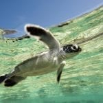 Three Initiatives for World Oceans Day