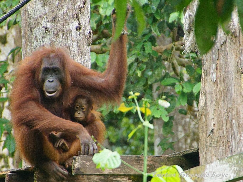 Sabah Borneo Holidays