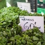 Alresford watercress fesitval