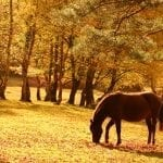 Whitsun Escape to the New Forest