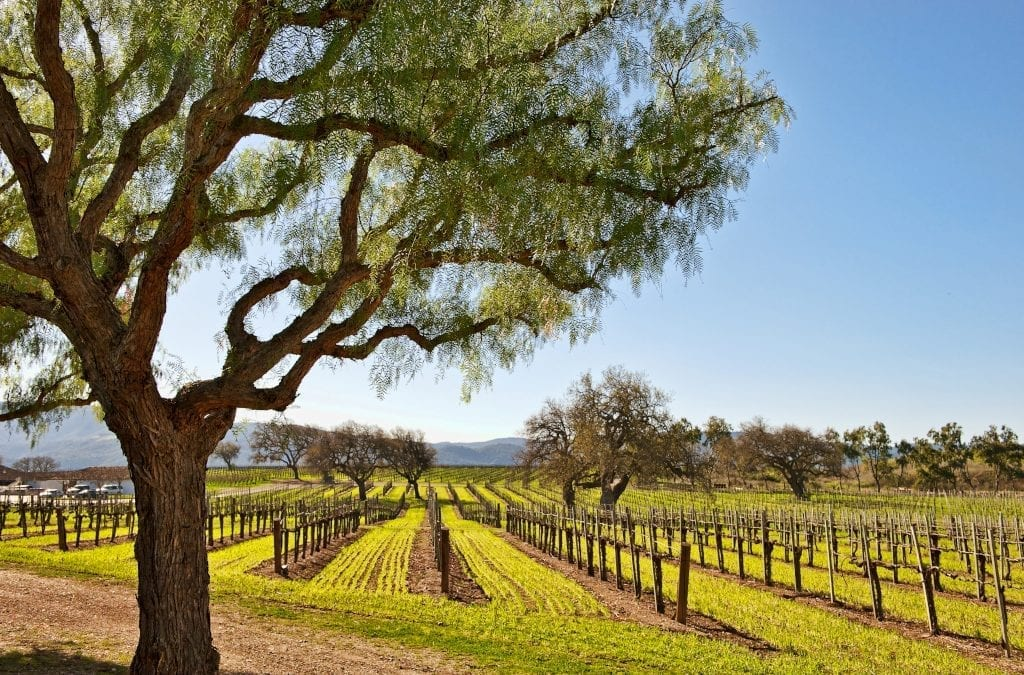 9 Ways to Sample Santa Barbara Wine