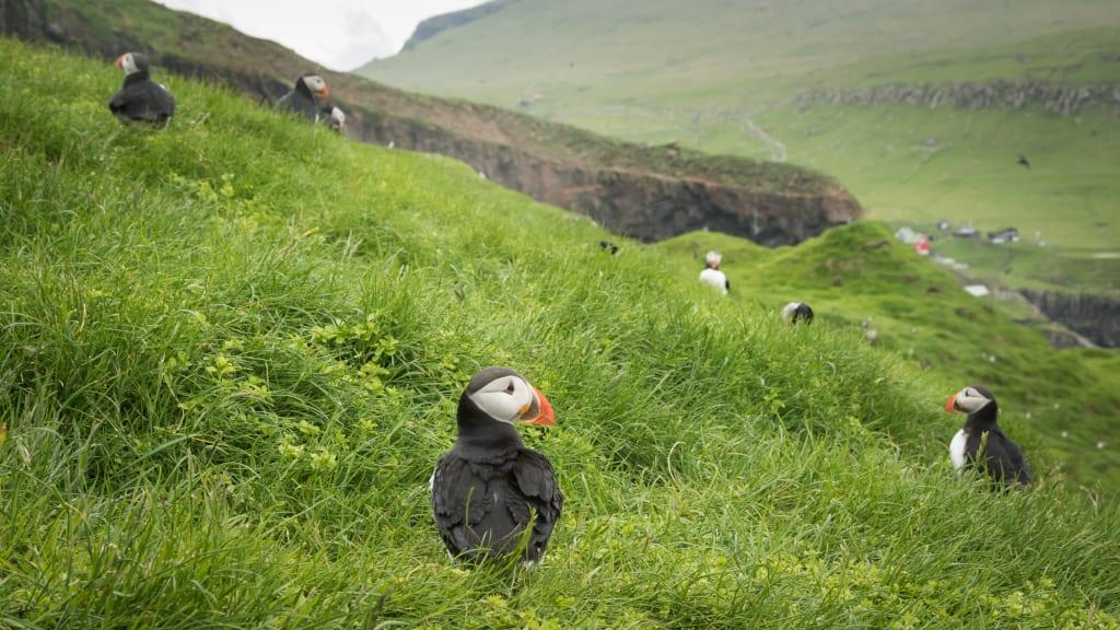 Faroe Islands Holliday