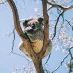Explore Queensland on National Wildlife Day