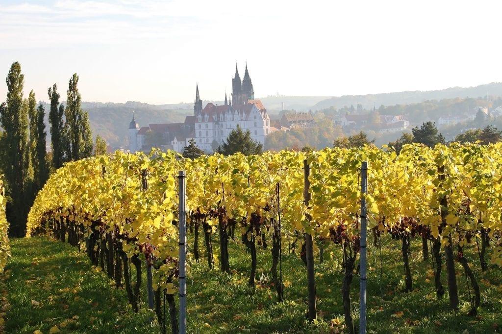 Saxony Wine trail