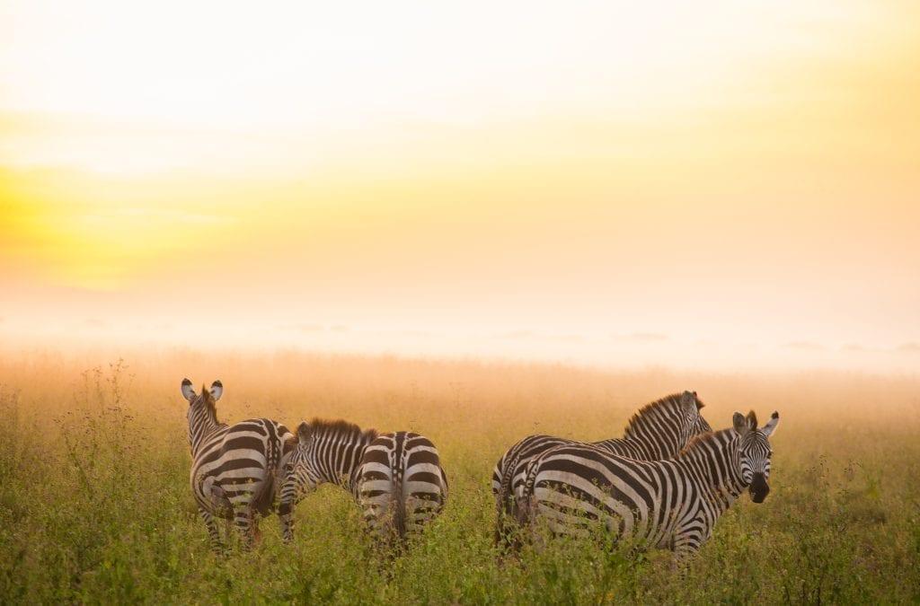 Take an African Safari This Weekend