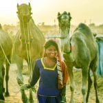 Visit India Camel Beauty Contest with TravelLocal