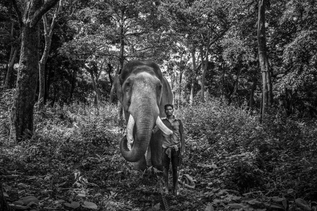 Angkor Photo Festival