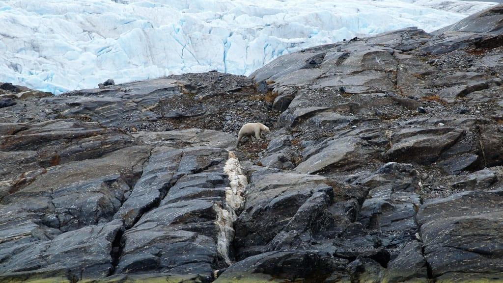 Share a Glacier with a Polar Bear