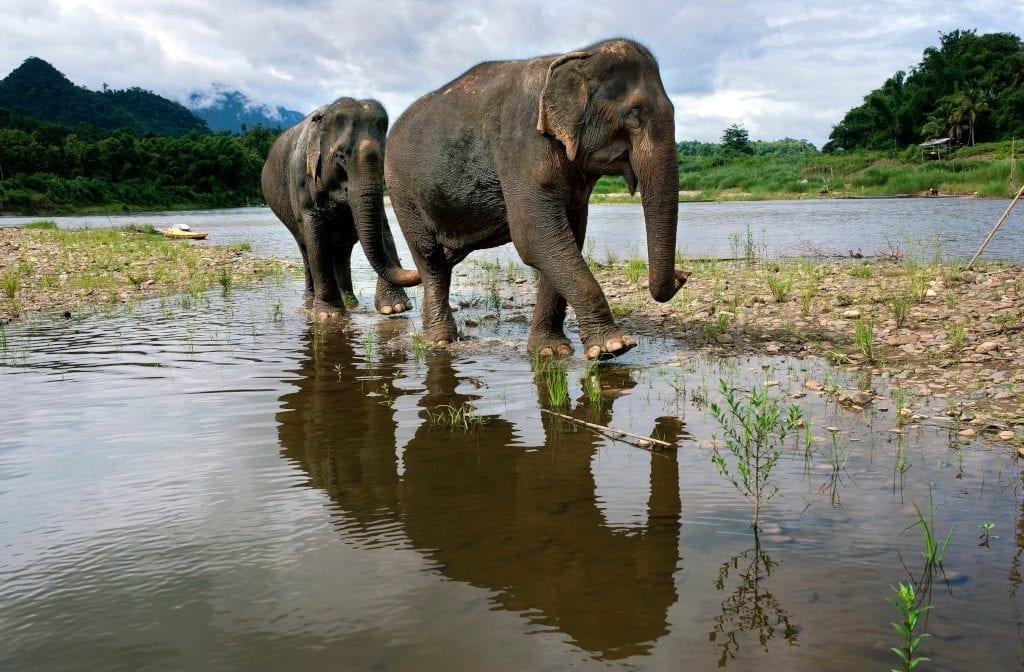 Walking with elephants at Mandalao, Laoso