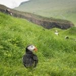 Faroe Islands Calls for Voluntourists