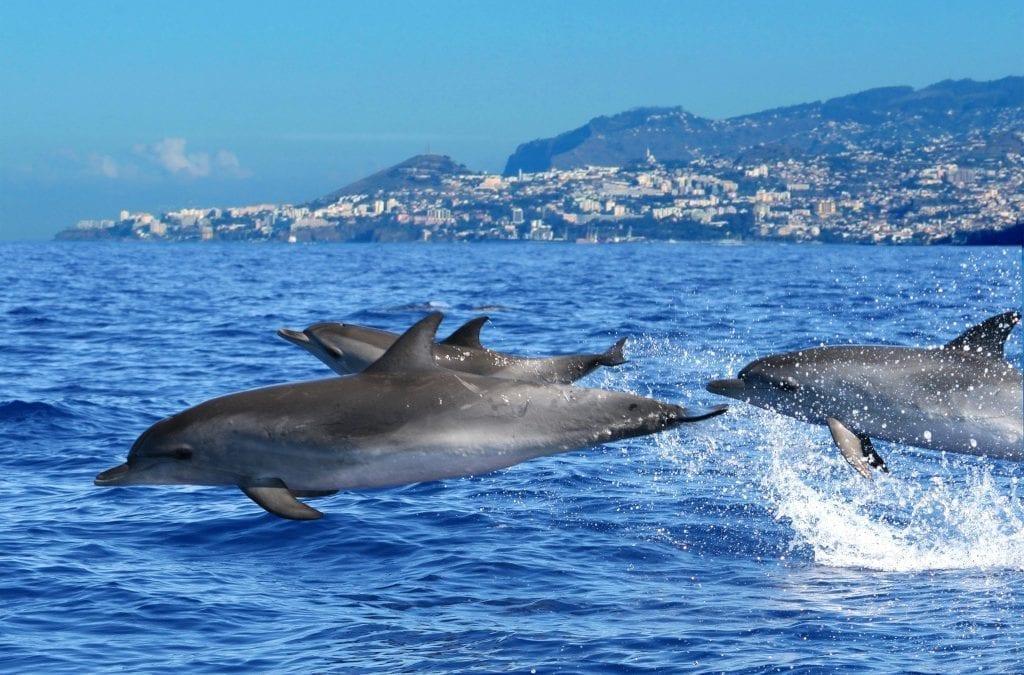 Discover Madeira with Artisan Travel