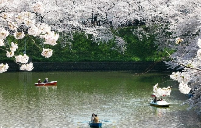 Cherry Blossom Japan