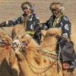 Camel Festival Mongolia 2020 (Temeenii Bayar)