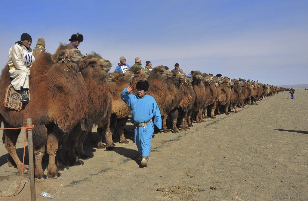Camel Festival Mongolia where to go in march