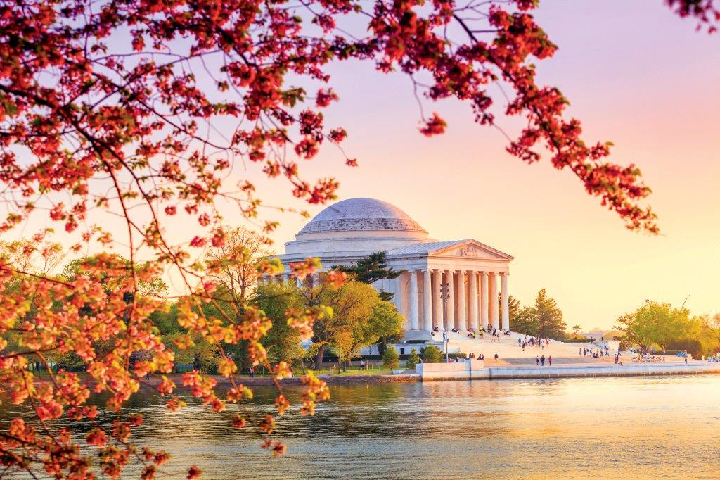 Flowers in the US: Washington DC, Jefferson Memorial Cherry Blossoms