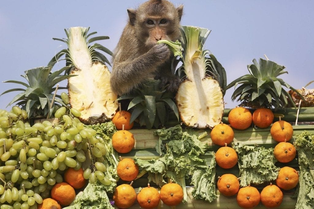 Thai Festivals - Monkey Buffet Festival
