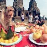 Monkey Buffet Festival, Lopburi, Thailand 2021