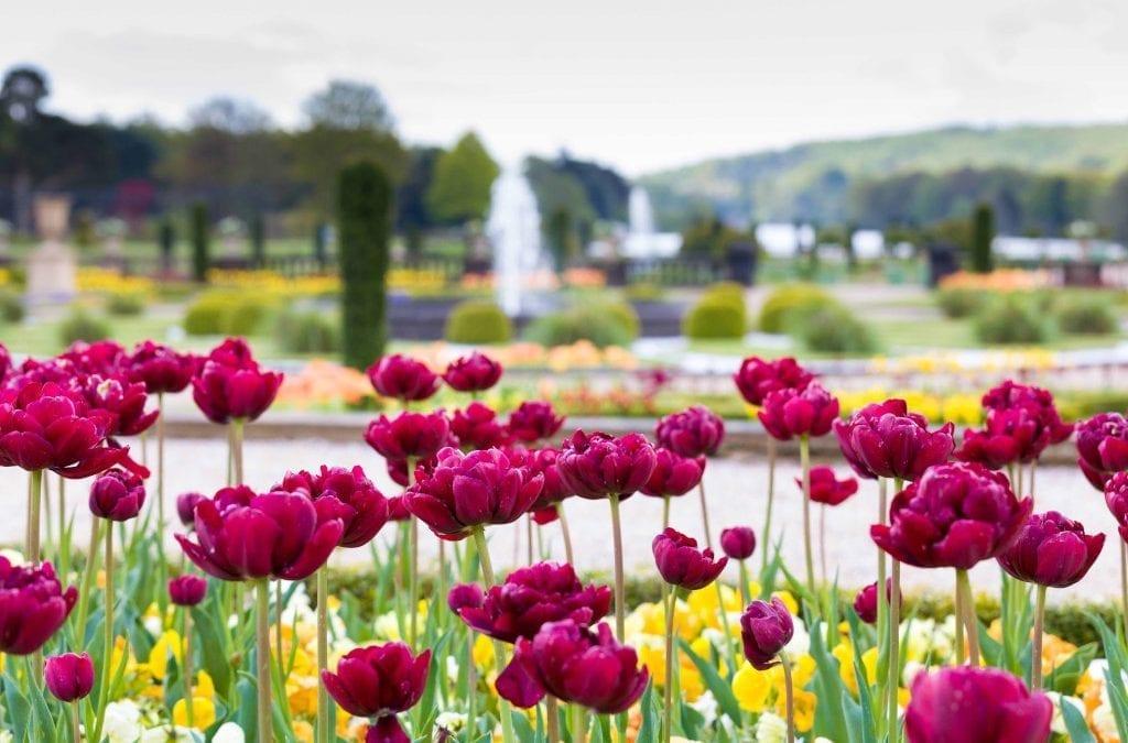 Trentham Spring Bulb Festival Bursts into Life