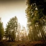 Spring Wildlife Safaris in the Forest of Dean