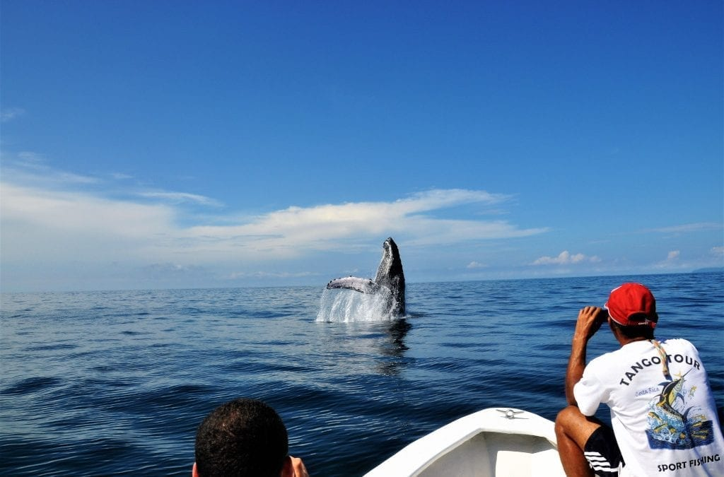 Join the Whale Watching in Costa Rica