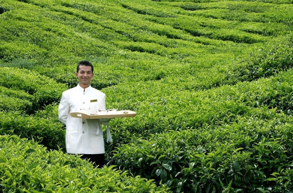 Losing Yourself in the Cameron Highlands