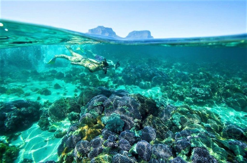 Snorkelling, Lord Howe Island 2