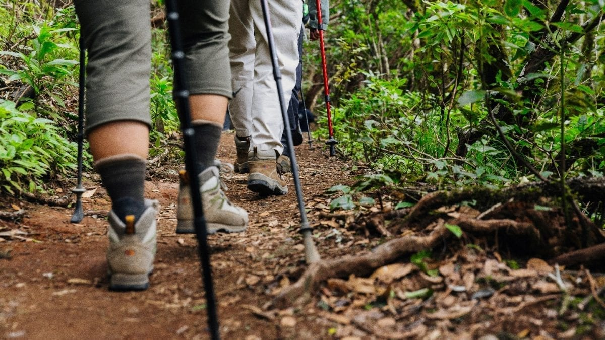 Fifth Edition of Tenerife Walking Festival