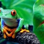 Costa Rica Sustainable Tourism: Leading the World