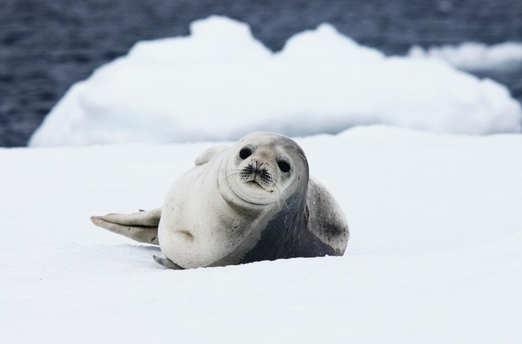 Discover the Wilderness of Antarctica