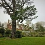 The gardens of Orestone Manor in the mists